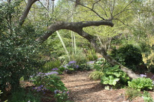 Under the arching oak in the woodland garden