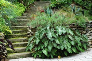 Stone steps out of the Sunken Garden