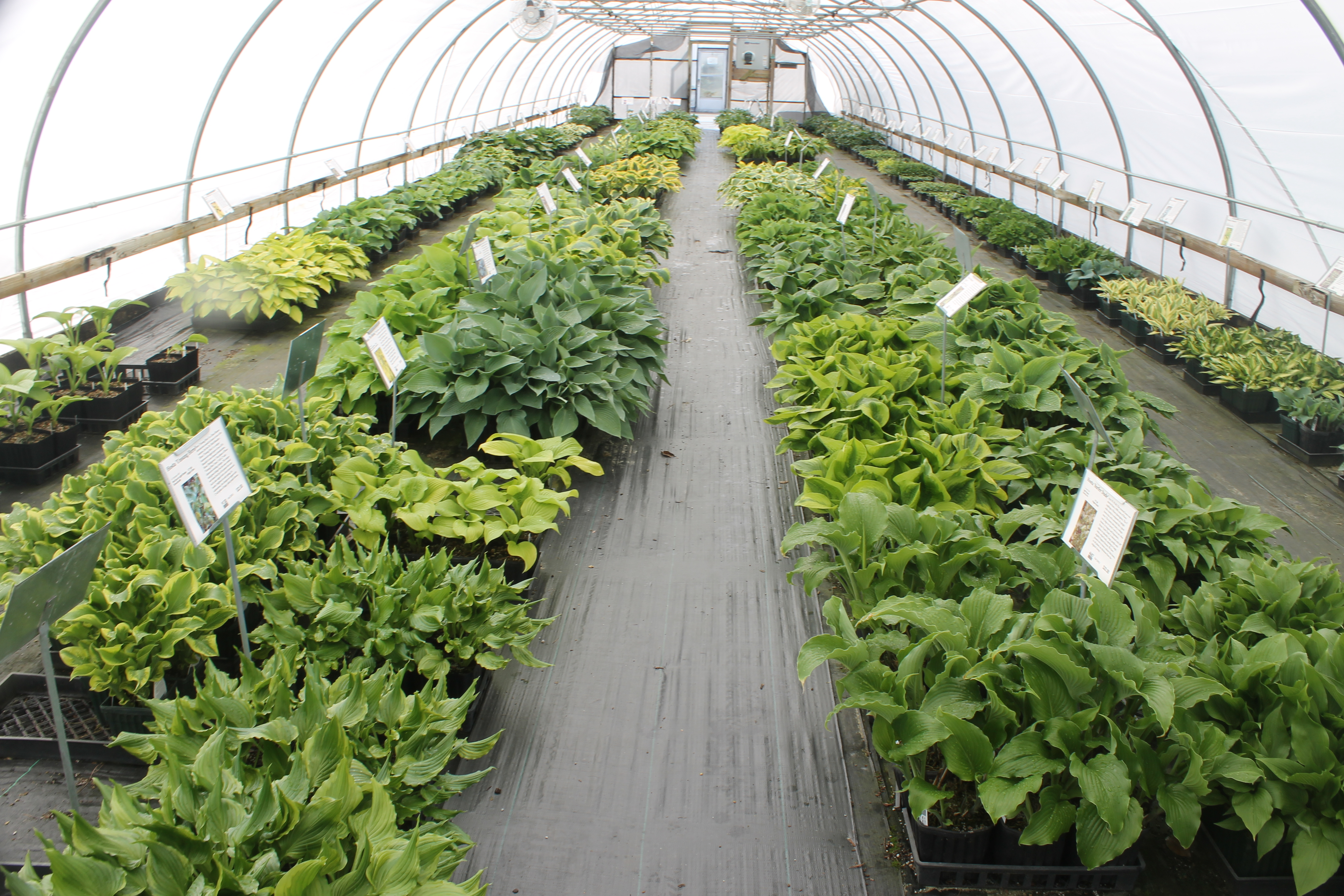 Plant Delights Nursery Blog