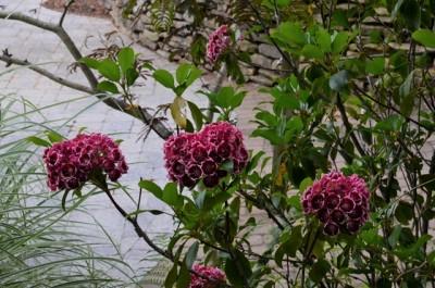 Sunken Garden at Juniper Level Botanic Garden