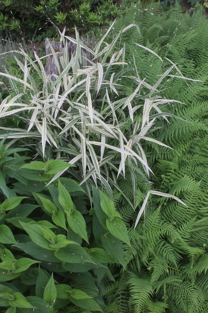 Chasmanthium latifolium River Mist, Tricyrtis, Thelypteris beddonii combo