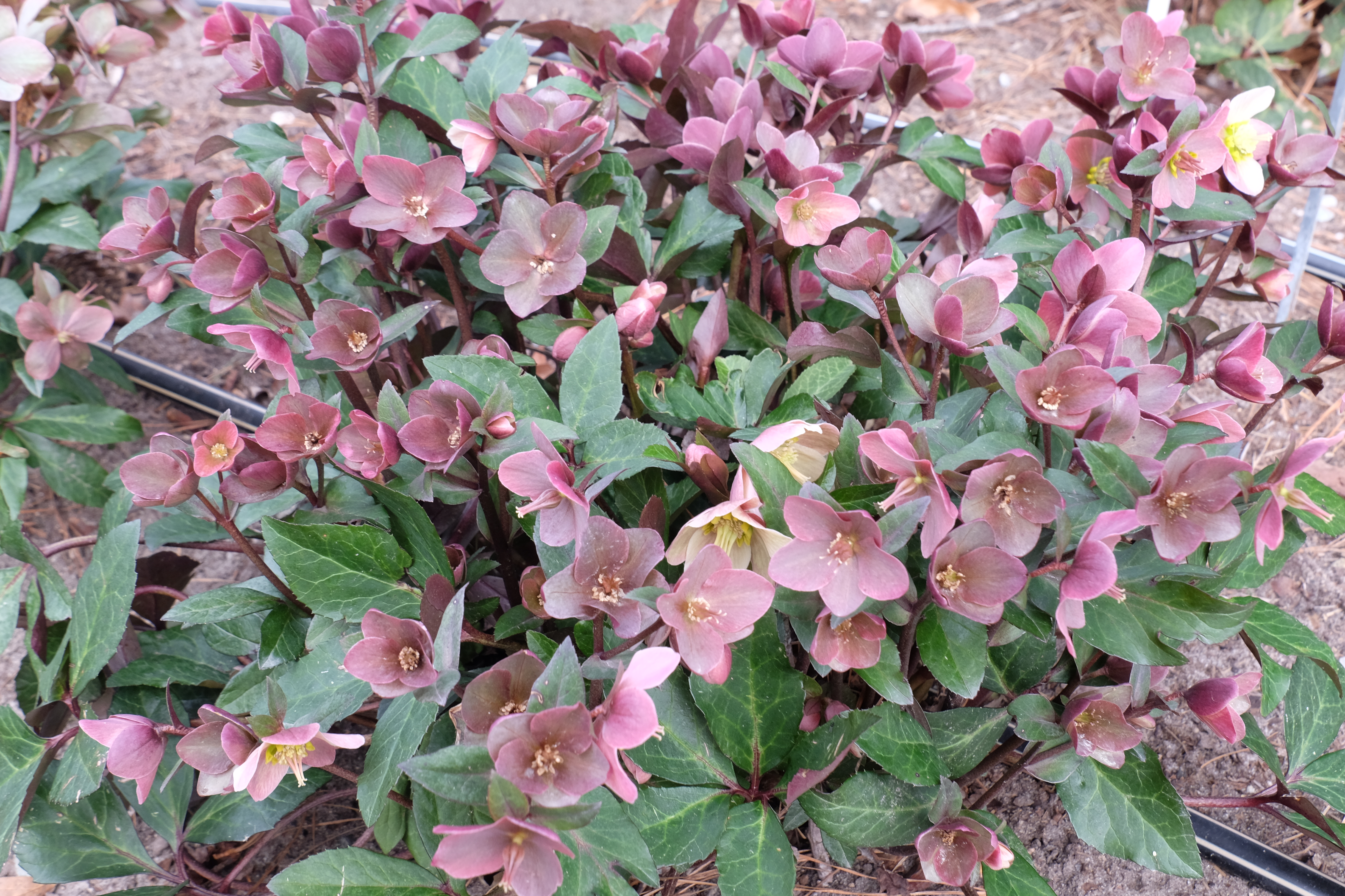 new plants available mar 24  2016